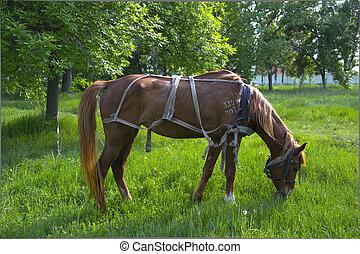 Beautiful brown horse at farm