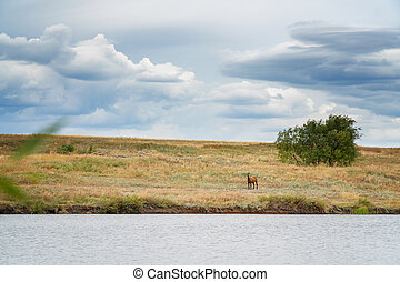 Beautiful brown horse grazing on the lake shore against a cloudy sky. Rural landscape