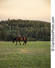 Beautiful brown Horse in pasture at sunset
