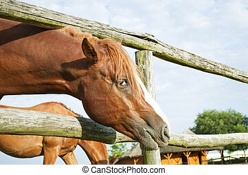 Beautiful brown horse looking at camera