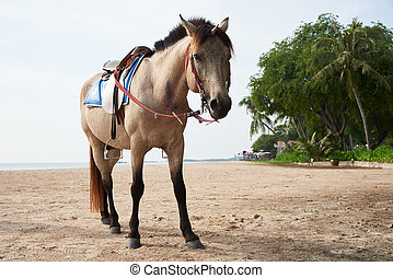 Beautiful brown horse standing on the beach