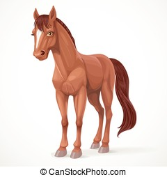 Beautiful brown horse with a star on his forehead isolated on white background