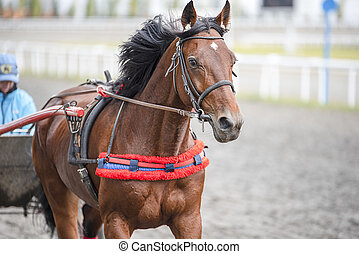 Beautiful brown horses running at the racetrack