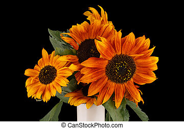 Beautiful brown sunflowers in vase on black background