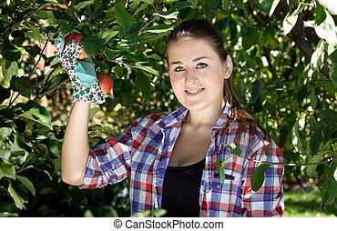 brunette woman in garden gloves picking apples from tree