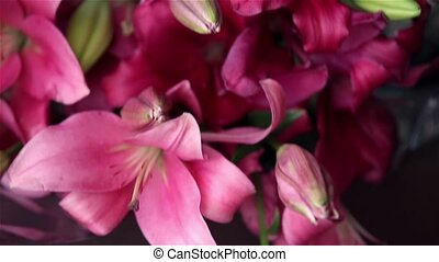 Beautiful bunch of pink and white lilies flower close up