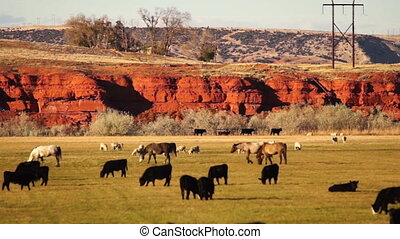 Beautiful Butte Livestock Ranch Thermopolis Wyoming Western...