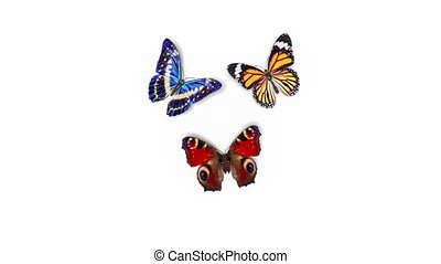 Beautiful Butterflies Different Colors Fly into the Screen, Sit Down and Fly Away. White and Green Backgrounds Close-up. Seamless 3d Animation with Alpha Channel. 4k Ultra HD 3840x2160