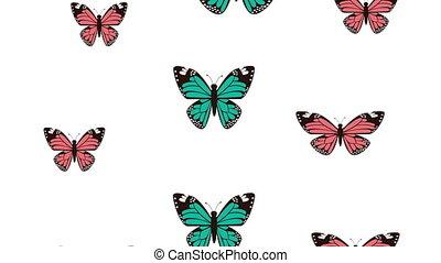 beautiful butterflies flying pattern animated