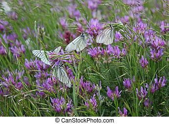 Beautiful butterflies in nature
