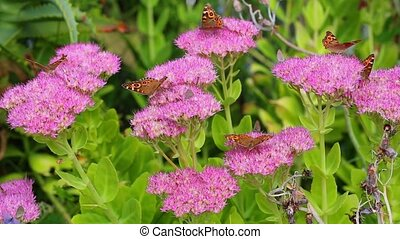 Beautiful butterflies on flowers
