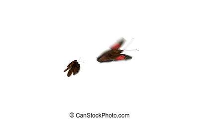 Beautiful Butterflies Playfully Fly on a Green
