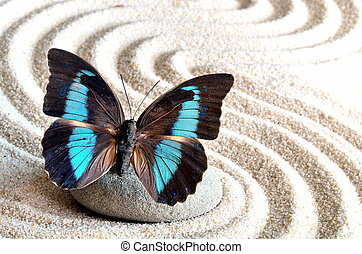 beautiful butterfly and stone on white sand with the waves