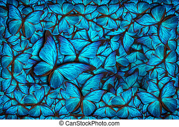 beautiful butterfly background