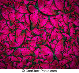 beautiful butterfly background - beautiful background with ...