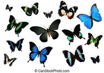 Beautiful Butterfly Collection 2