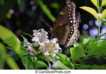 Beautiful butterfly & flower in the garden