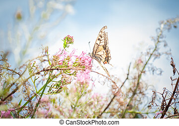 beautiful butterfly in a sunny day