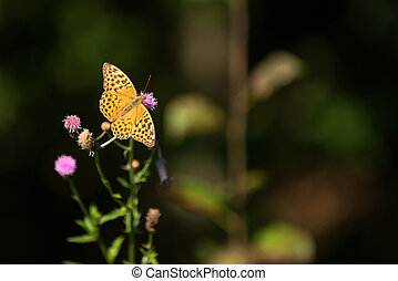 Beautiful butterfly in summer time