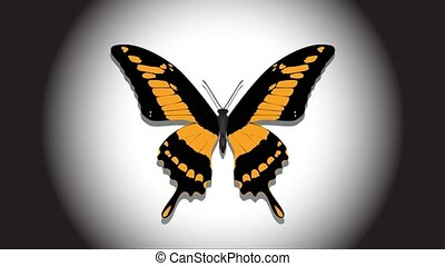 Beautiful butterfly in the spotlight, appears and flashes in different colors