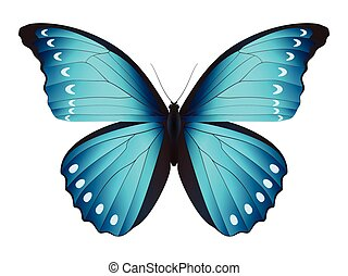 Beautiful butterfly isolated on a white background. Diana...