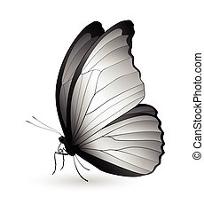 Beautiful butterfly isolated on a white background. Godarti...