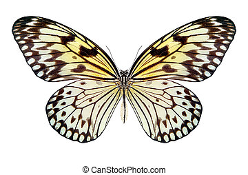 beautiful butterfly isolated on a white