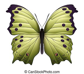 Beautiful butterfly isolated on a white background. Salamis...
