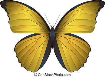 Beautiful butterfly isolated on a white background. Vector...