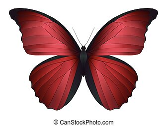 Beautiful butterfly isolated on a white background. Vector ...