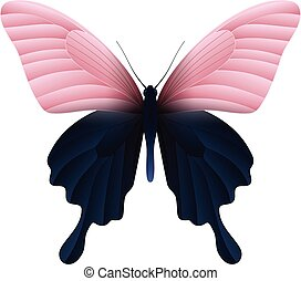 Beautiful butterfly isolated on a white background - Papilio...