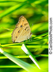 Beautiful butterfly on a blade of grass.