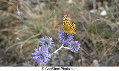 Beautiful butterfly on a flower spike, summer meadow. Nature...