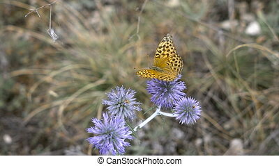 Beautiful butterfly on a flower spike, summer meadow. Nature...