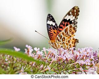 Beautiful butterfly on a flower