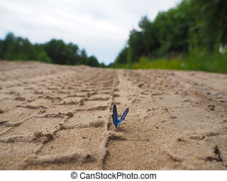 beautiful butterfly on a forest road