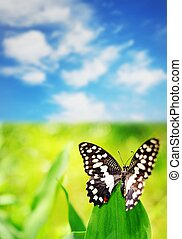 Beautiful butterfly on a green leaf over blue sky