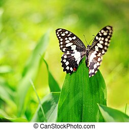 Beautiful butterfly on a green leaf