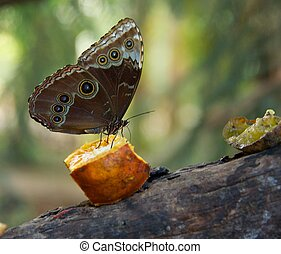 Beautiful butterfly on a peace of fruit.