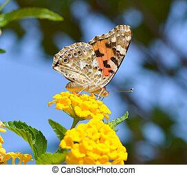 Beautiful butterfly on flower macro shot