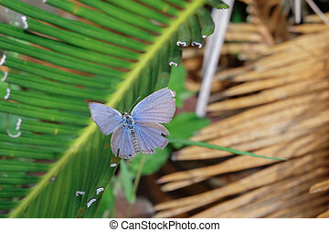 beautiful butterfly on green leaves.
