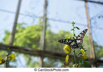 beautiful butterfly on yellow flower in public park in the morning