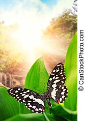 Beautiful butterfly over waterfall in wild forest