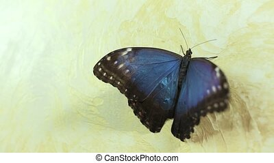 Beautiful butterfly sits on the wall 4k