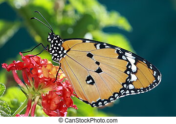 beautiful butterfly with red flower and green background