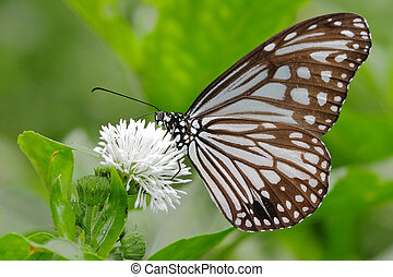 beautiful butterfly with white flower