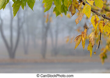 Beautiful calm misty autumn park yellow leaves frame -...
