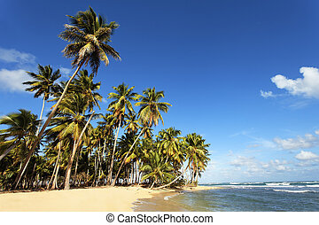 beautiful cara?bean beach with palm trees and blue sky