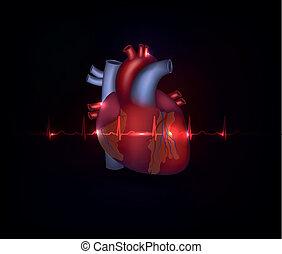 Beautiful cardiology heart design and normal cardiogram -...