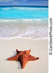 caribbean starfish tropical sand turquoise beach